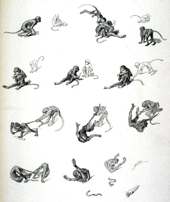 steinlen-singes