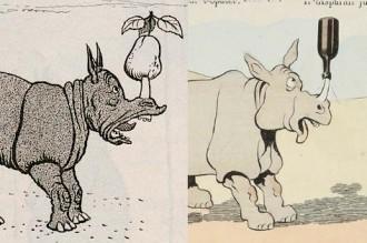 rabier-fb-rhinoceros-vign